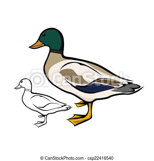 Vecteur eps de colvert canard vecteur illustration - Illustration canard ...