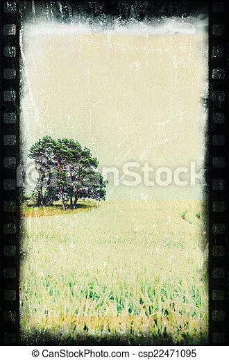 pine on farmland II