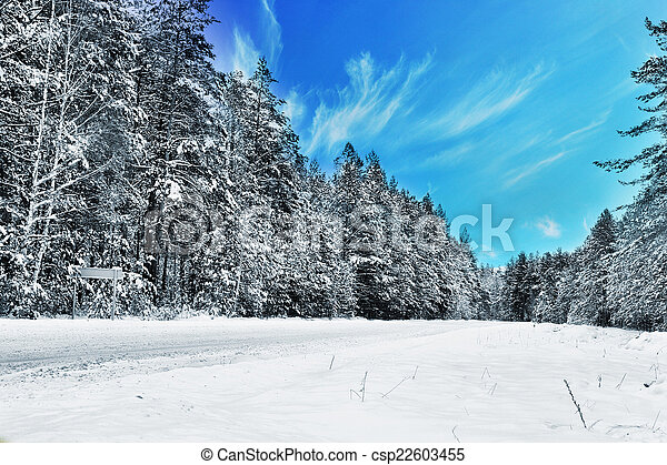 Snow-covered forest road, winter landscape