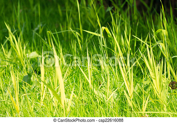 Vibrant green grass with small DOF