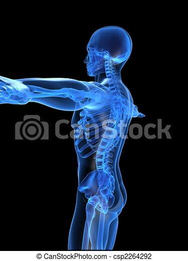 human skeleton - csp2264292