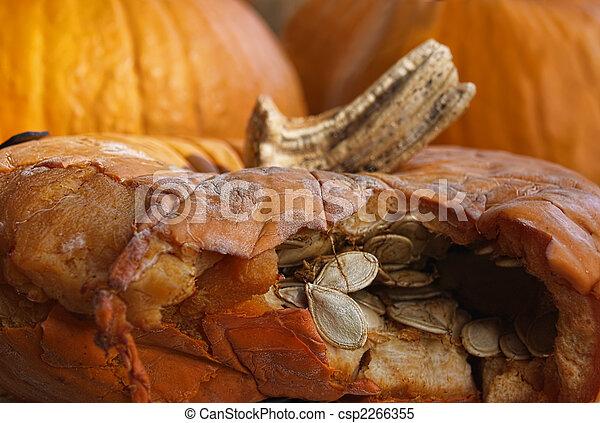 Decaying pumpkin - csp2266355