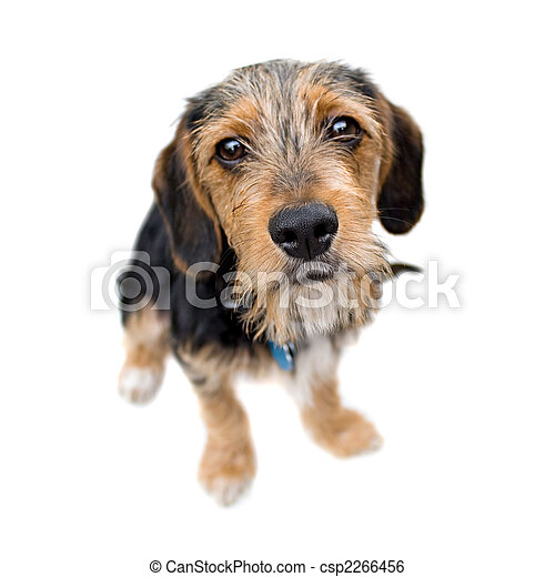 Cute Puppy Dog Sitting - csp2266456