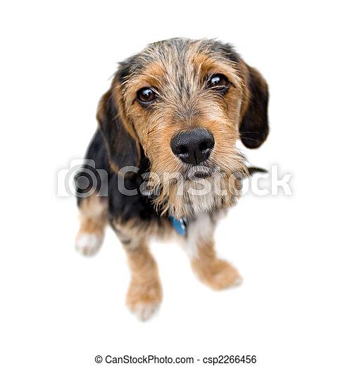 Cute Puppy Dog Sitting - csp2266456