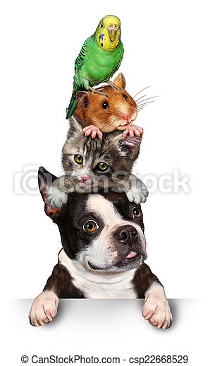 Gruppe, Haustiere - csp22668529