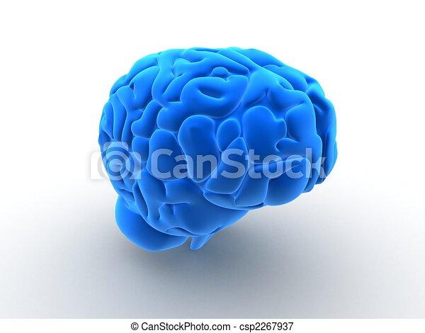 human brain - csp2267937