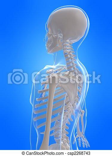 human skeleton - csp2268743