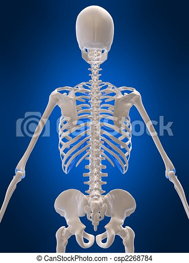 3d rendered illustration human skeleton backside illustrations and, Skeleton