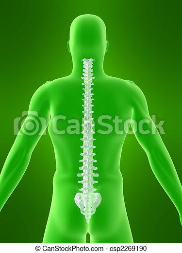 human spine - csp2269190