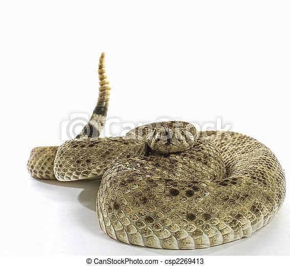 Western Diamondback Rattlesnake - csp2269413