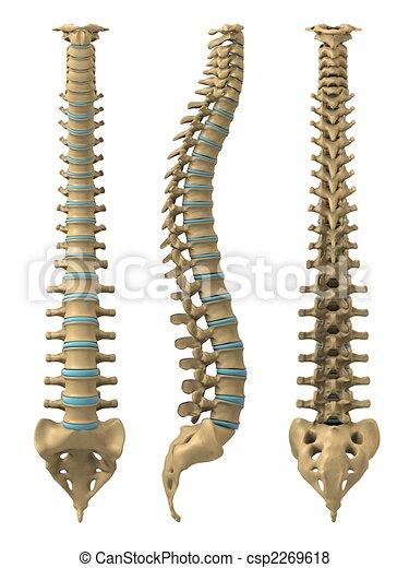 human spine - csp2269618