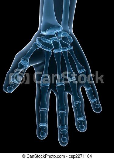 skeletal hand - csp2271164