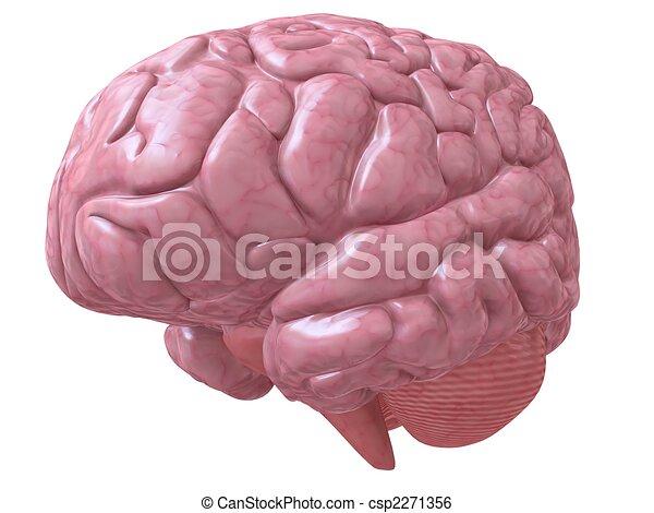 human brain - csp2271356