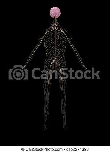 human nerve system - csp2271393