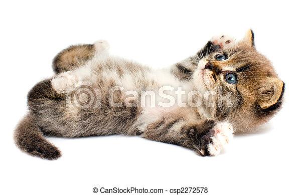 Funny kitten - csp2272578