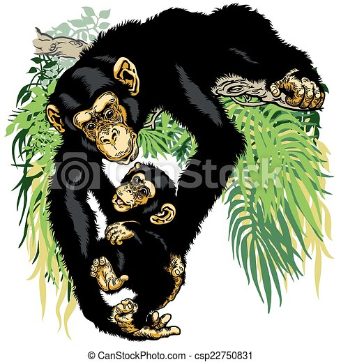 Vectors of chimpanzee holding baby chimp - chimpanzee ...