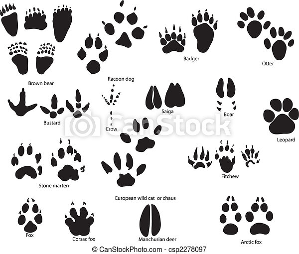 animal trails with title - csp2278097