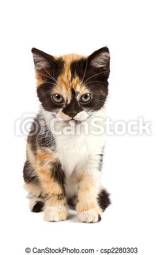 Sadness kitten sits - csp2280303