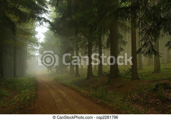 forest in fog 18 - csp2281796