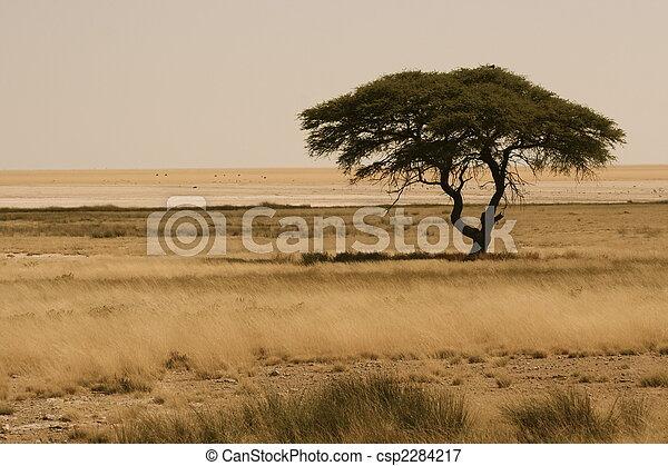 Africa - csp2284217