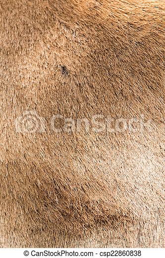 background of sheep skins