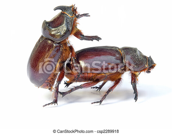 Bugs sex - csp2289918