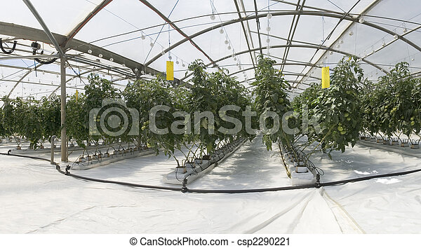 Photographies de int rieur serre hydroponic culture - Serre de culture interieur ...