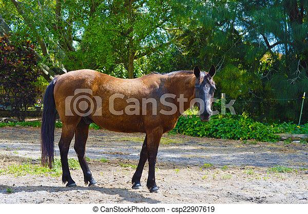 Archivi fotografici di cavallo in fattoria immagine for Piani di fattoria georgiana