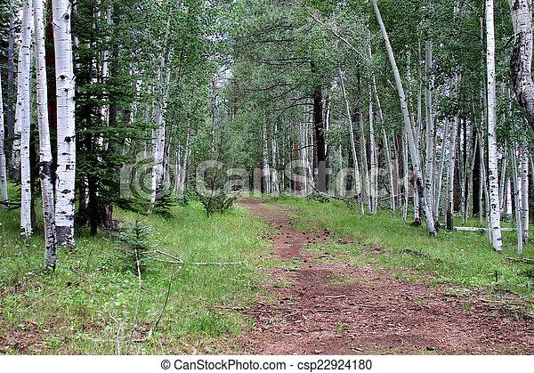 Aspen Trail White Mountains, AZ - csp22924180