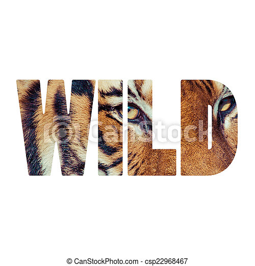 Stock Image Of Word Wild Close Up Of A Tigers Face Word