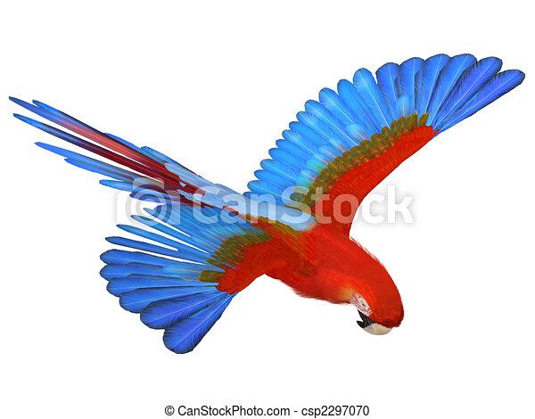 Macaw - csp2297070
