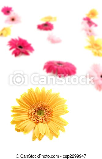 Gerbera yellow flower colorful blur flowers background - csp2299947