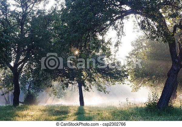 Dawn in the apple garden of Eden - csp2302766