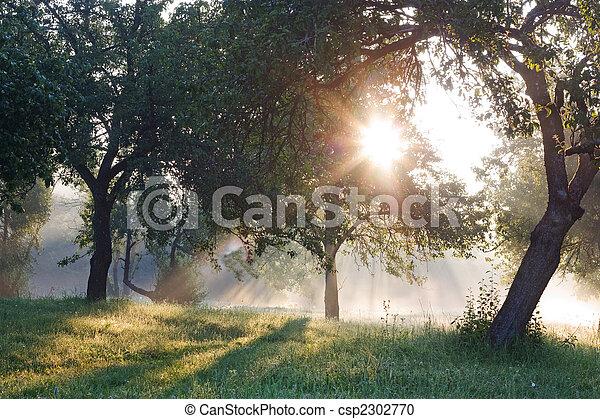Dawn in the apple garden of Eden - csp2302770