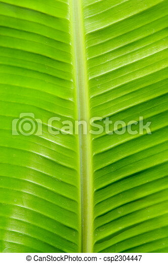 banana leaf - csp2304447