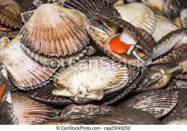 Seafood - Scallops - csp23045252