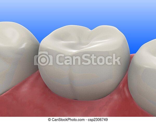 human tooth - csp2306749