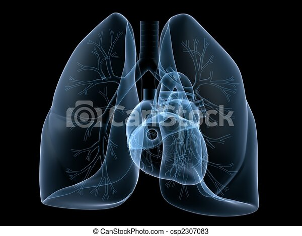 x-ray heart and lung - csp2307083