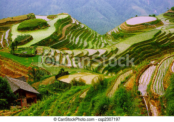 Rice terraces in mounting of Yunnan, China - csp2307197