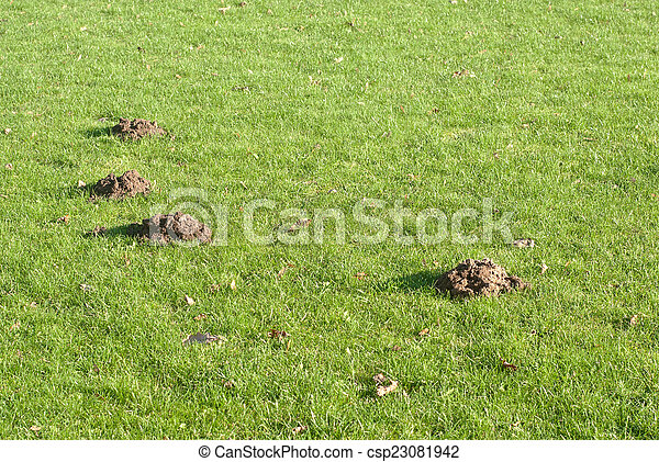 Mole mounds in the sport stadium