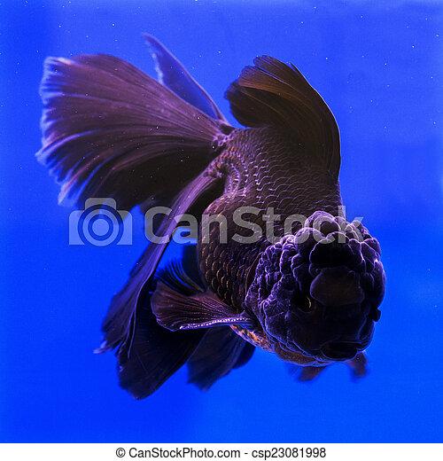 Banque de photographies de poisson rouge aquarium vert for Tarif poisson rouge