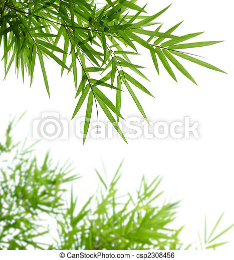 bamboo leaves - csp2308456