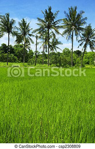 農業 - csp2308809