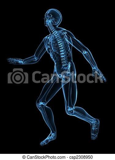 human skeleton - csp2308950