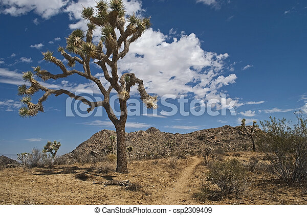 The Joshua Tree - csp2309409