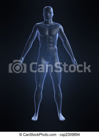 male body shape - csp2309894
