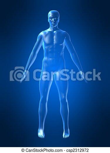 human body shape - csp2312972