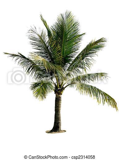 棕櫚, 樹, 被隔离 - csp2314058
