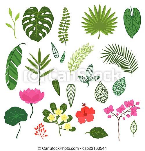 Vecteur , stylisé, ensemble, feuilles, exotique, fleurs, Usines