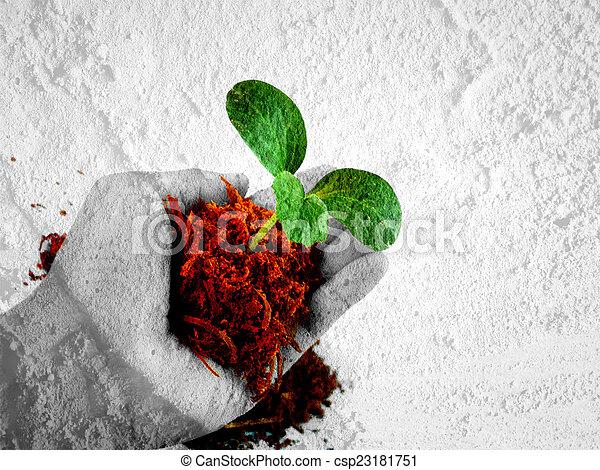 árvore pequena, segurando mão - csp23181751